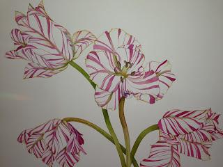 pinkphoto-1
